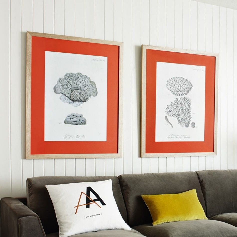 Coral Framed Prints - View All Home Accessories - Home Accessories ...