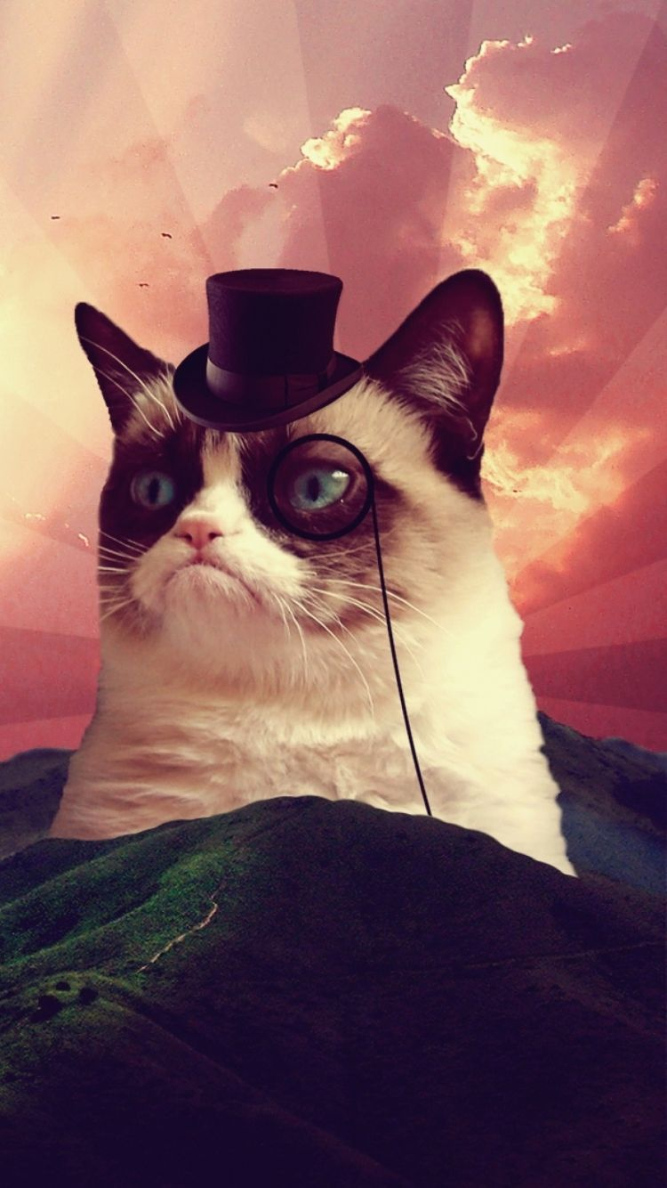 Grumpy Cat Tap to see more funny homescreen jokes