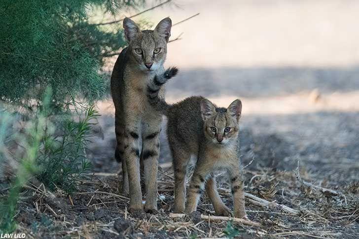 En Facebook, joven recogió a gatos callejeros y veterinaria le dio gran sorpresa | FOTOS | Noticias del Perú | LaRepublica.pe