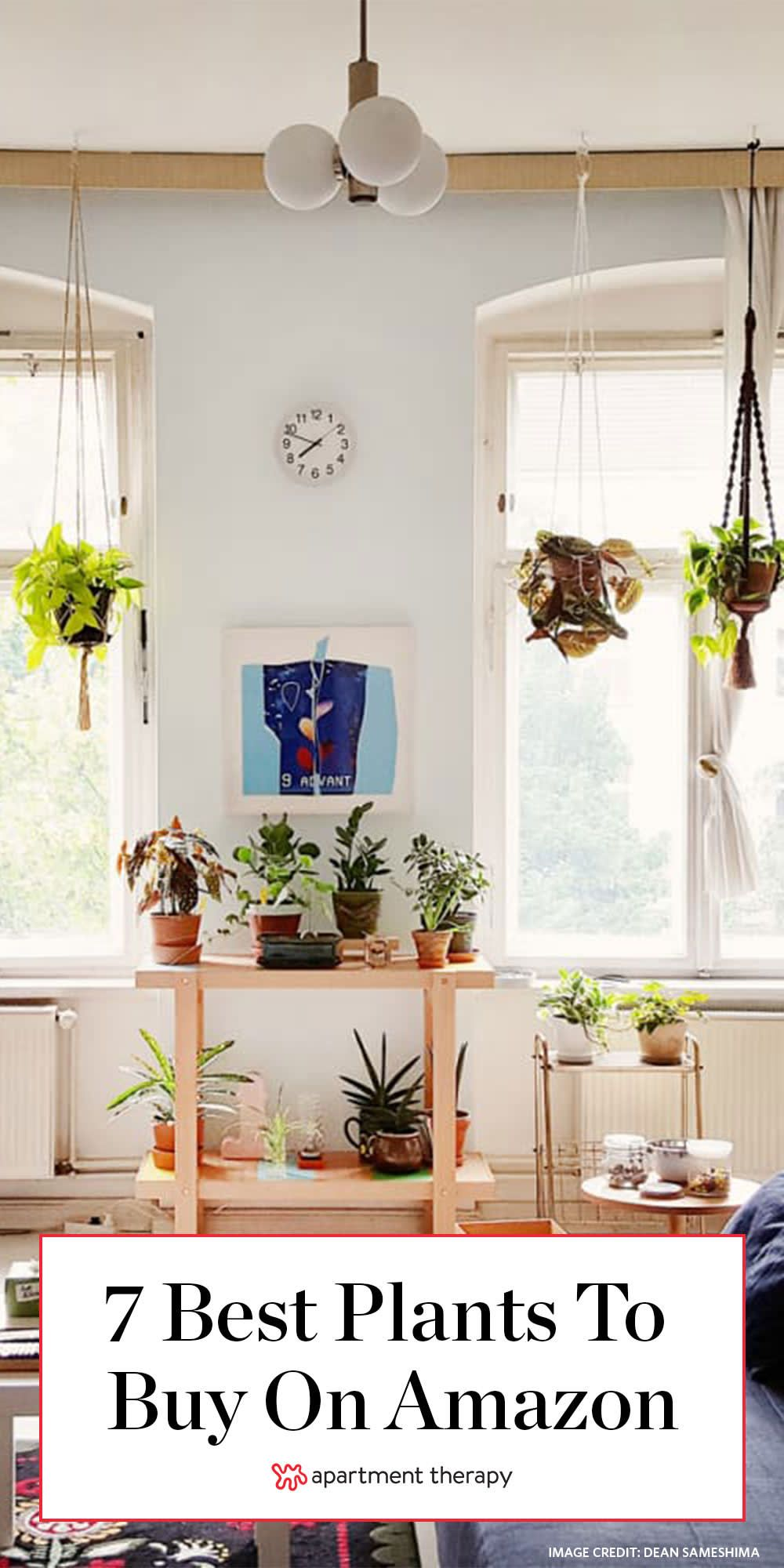 7 Plants You Can Buy on Amazon to Make Your Winter a