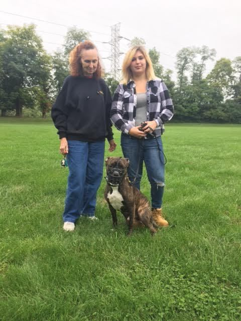 Recent Dog Training Graduate Clover With Jan S From Hamburg Pa