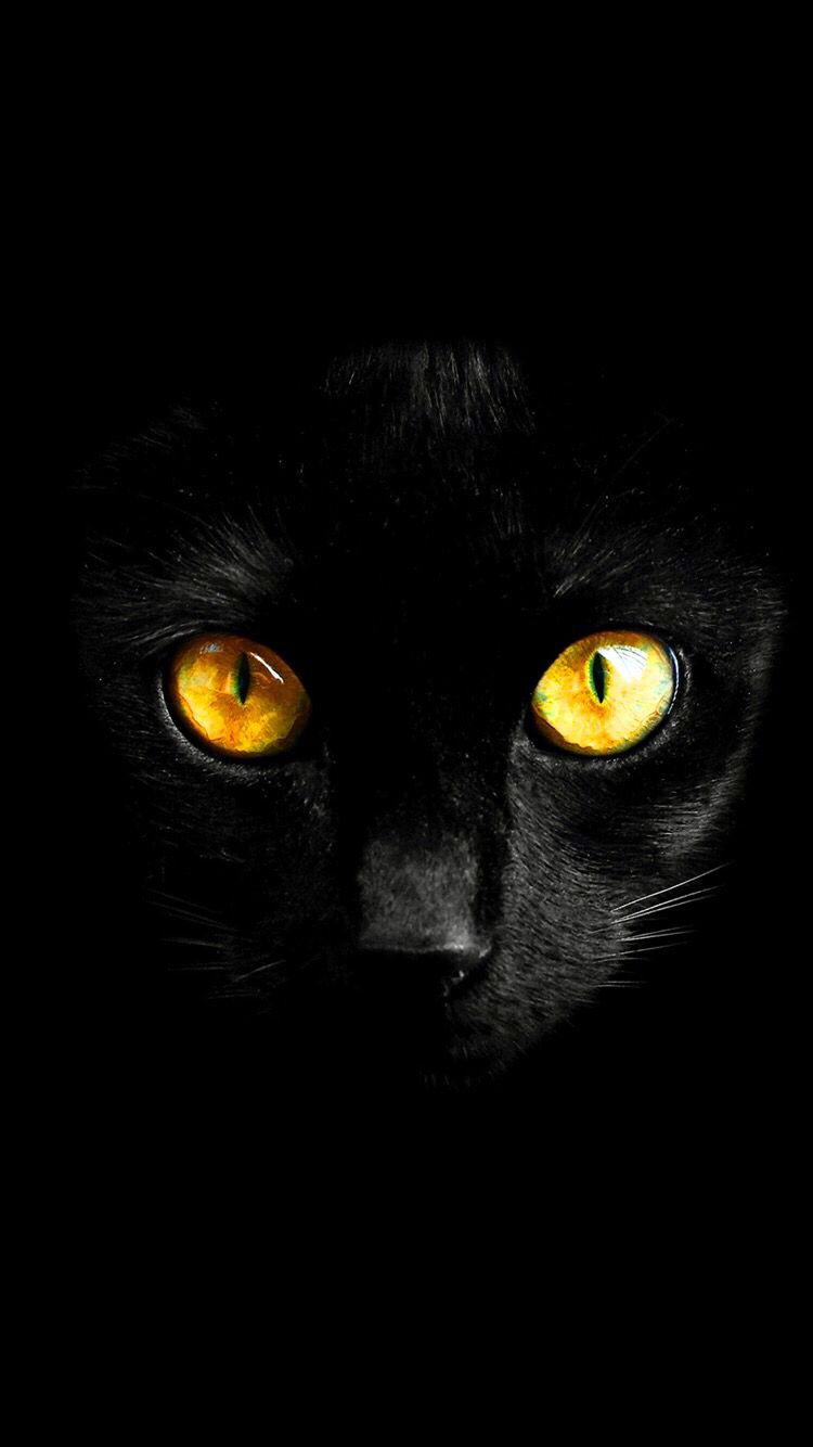 Black Cat Wallpaper For Your Iphone Xs Max From Everpix