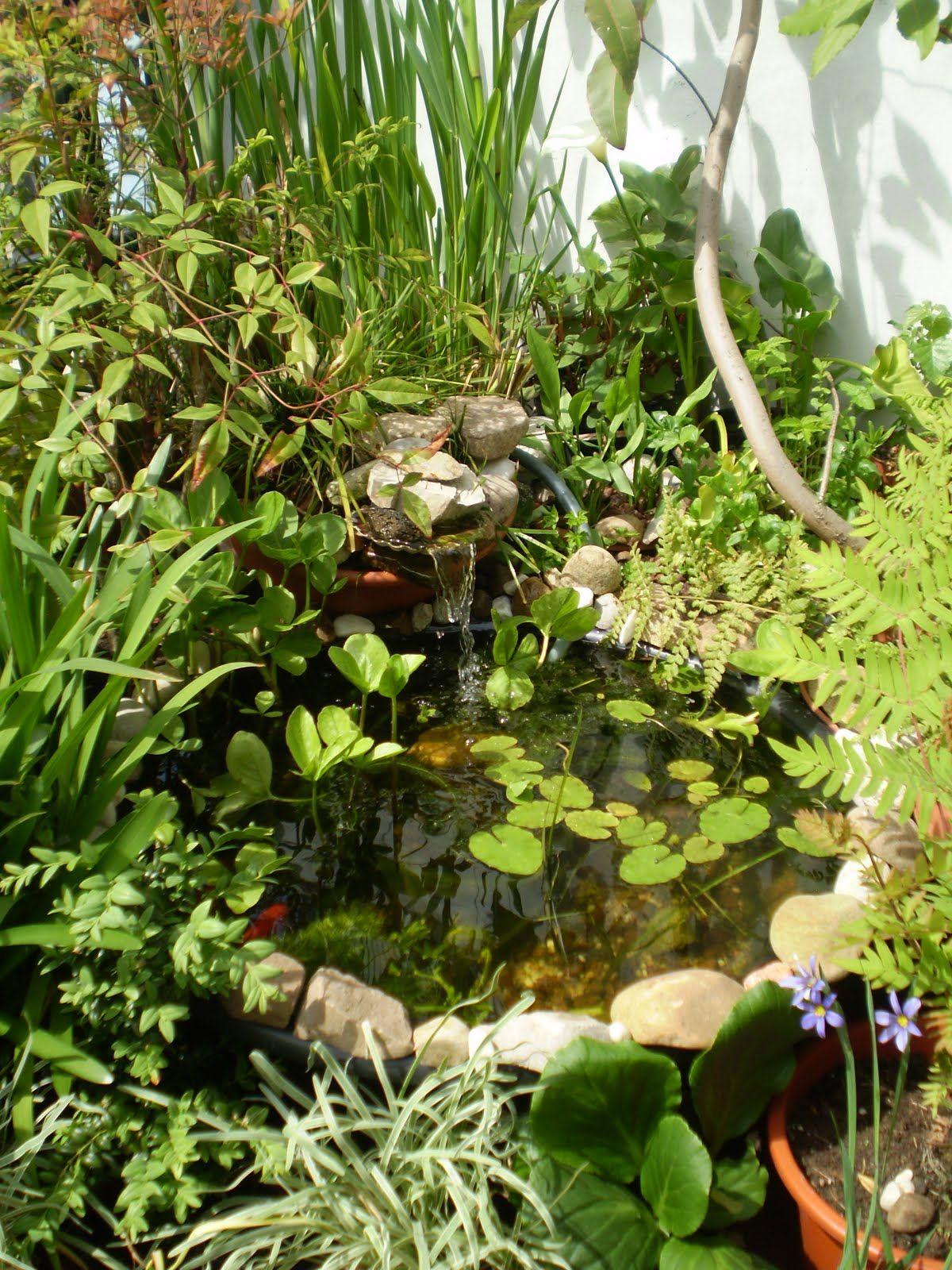 El viejo estanque en la terraza jardines pinterest for Plantas estanque