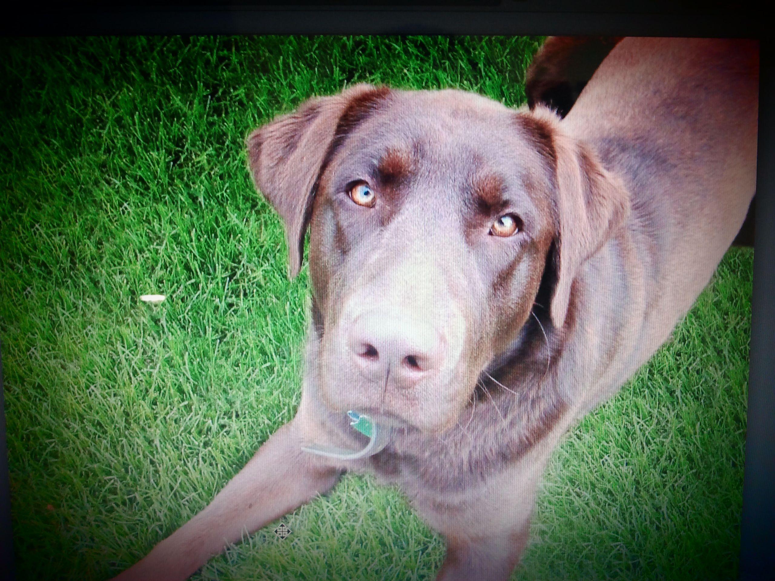 oto pies który lubi skakać na gości - jest tak duży, że mógłby Ci dać BUZI gdy stanie na dwóch tylnich łapach. http://www.szkola-doberman.pl/szkolenie-psow/pies-skacze-na-gosci-a-ty-co/