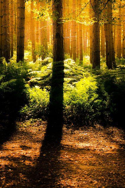 Sunrays shinning through the trees...