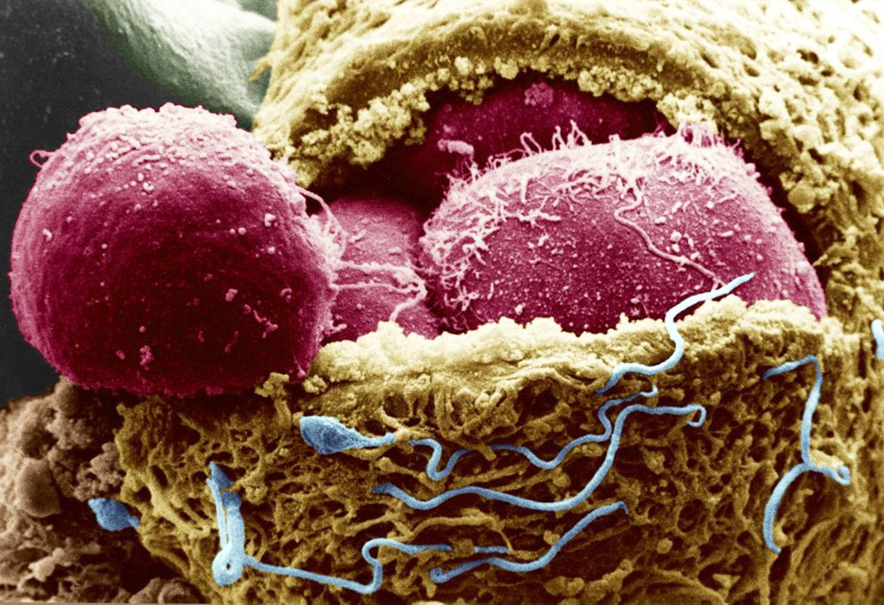 Image result for do stem cells look like
