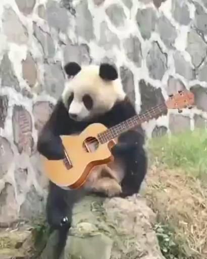 🐼 She plays guitar