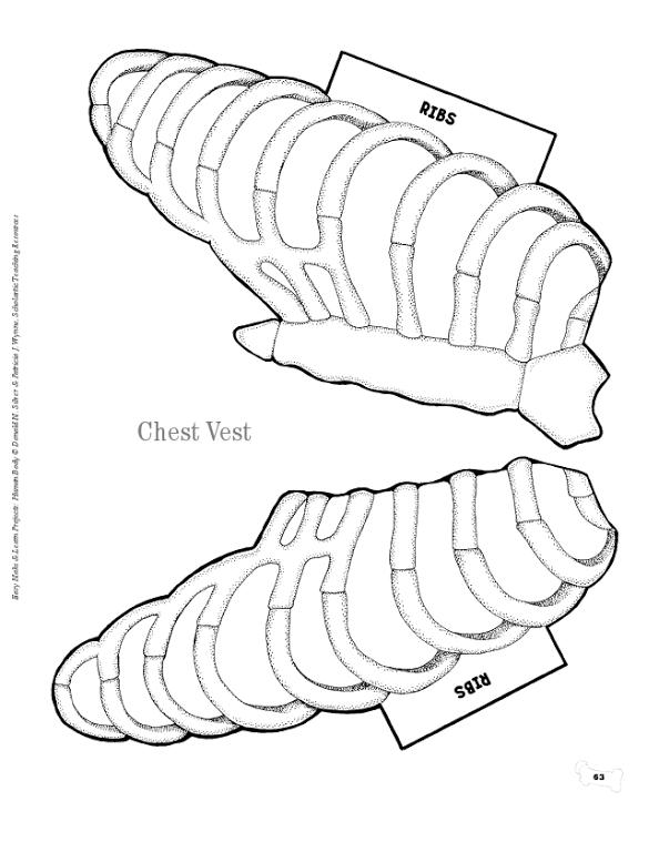Human body vest.pdf | Sachunterricht | Pinterest