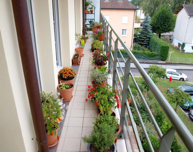 Balkonpflanzen Sonnig Kleinen Balkon Gestalten Und Dekorieren ... Balkon Gestalten Balkonmobel Balkonpflanzen