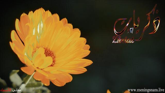 معنى اسم ذكريات وصفات حاملت هذا الاسم Zkriat Flowers Plants Dandelion