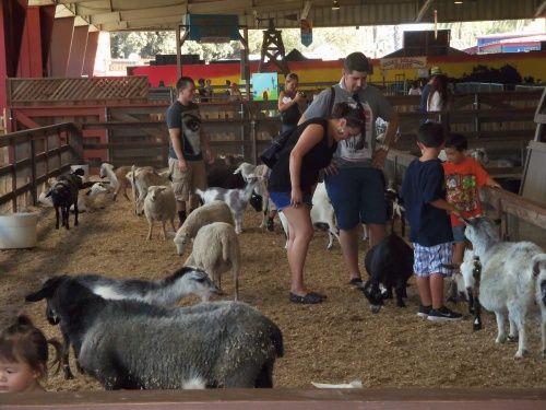 Photos of the Farm Animals at the Los Angeles County Fair