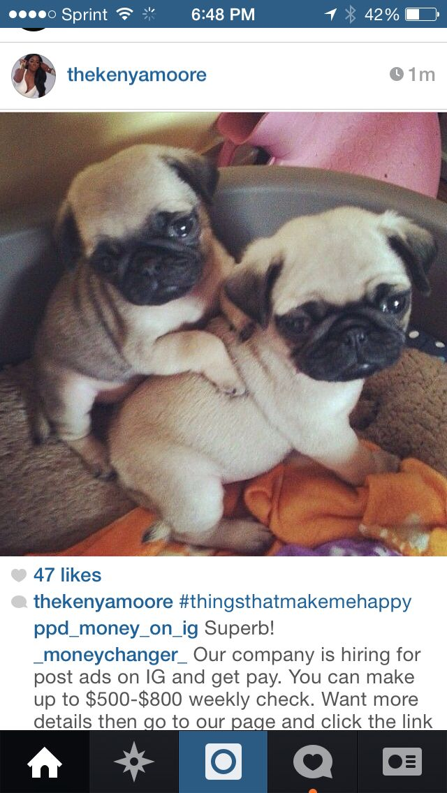 Pin By Kerriy Washington On Animals Baby Pugs Cute Pugs