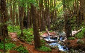 Big sur forest.jpg