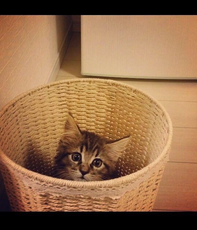Kitten In A Laundry Basket Kittens Cat Box Cute Cat