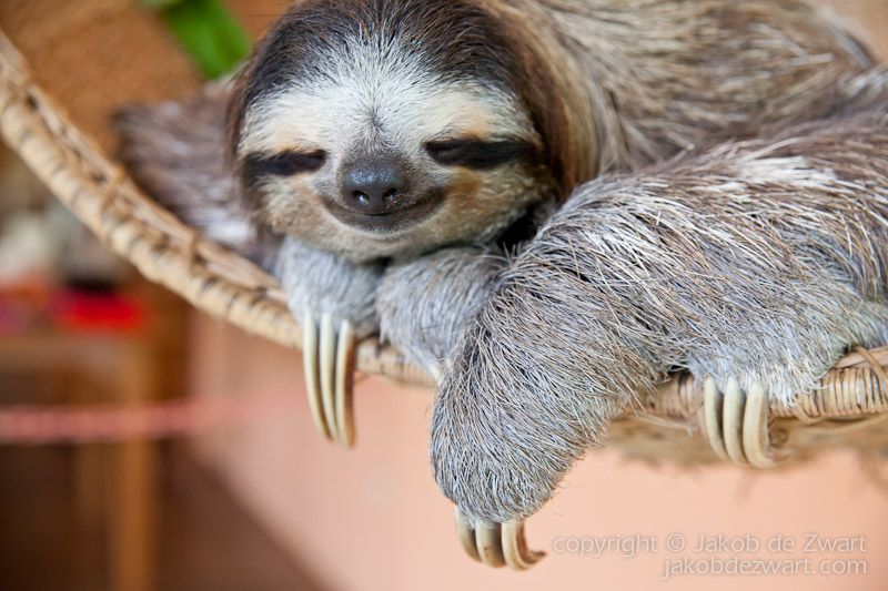 Image result for sloth sleepy