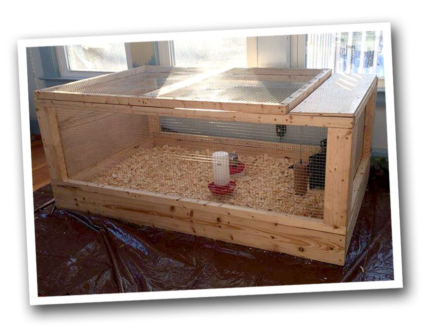 Chicken Brooder Run Plans. (Use as brooder and then add to run ...