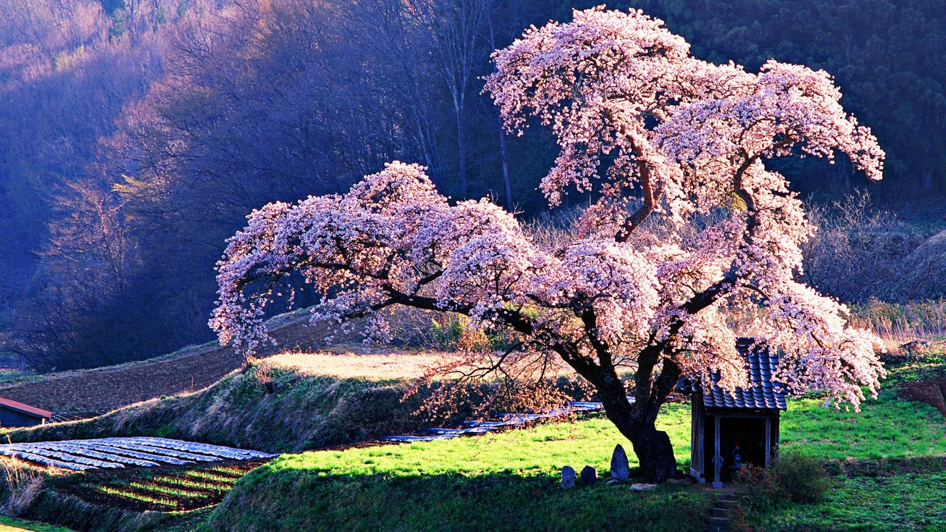 The 18 Most Beautiful Trees In The World Blossom Trees Beautiful Nature Japan Landscape