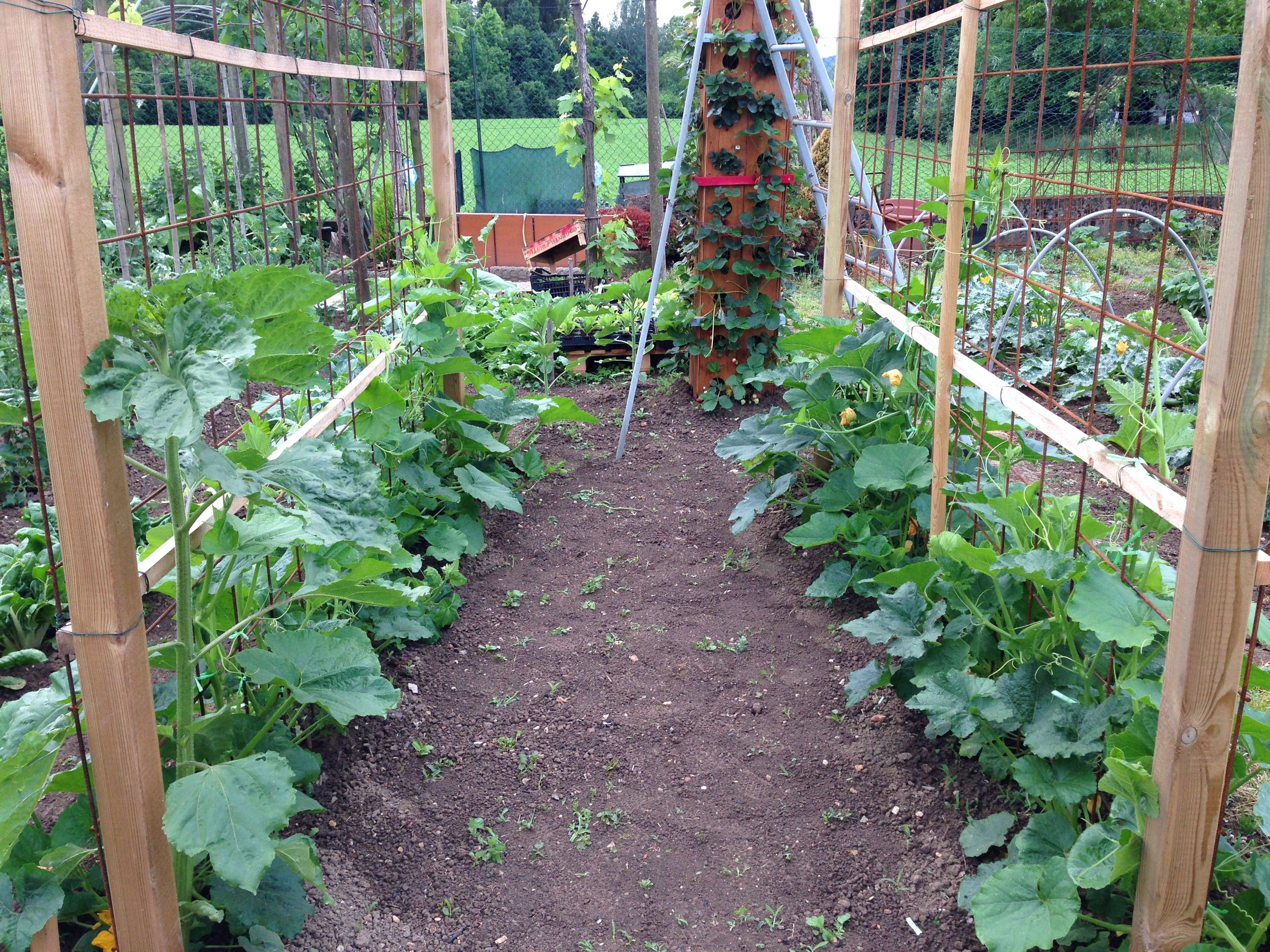 Pumpkins trellis the pumkins grow grow up garden and for Vegetable garden trellis designs