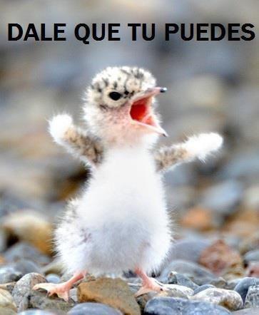 """This little guys says, """"¡Dale que tu puedes!"""" #dqtp"""