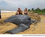 Tartaruga enorme