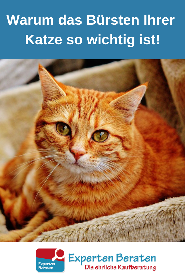 Cat Care 101 Keeping Your Cat Healthy Ideas Cat names