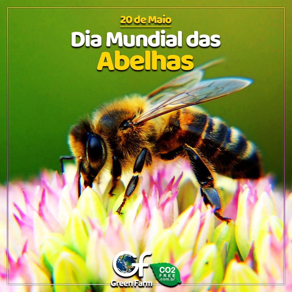 Dia Mundial das Abelhas O 20 de maio foi escolhido para a data por ser o dia  do nascimento de Anton Janš… | Abelha, Dia do nascimento, Desenvolvimento  sustentável