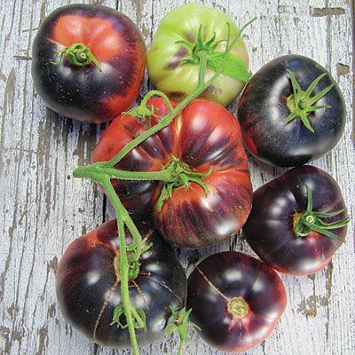 e88d57b53b852b62dc80c26908057cc5 - Gardeners World Magazine Free Tomato Seeds