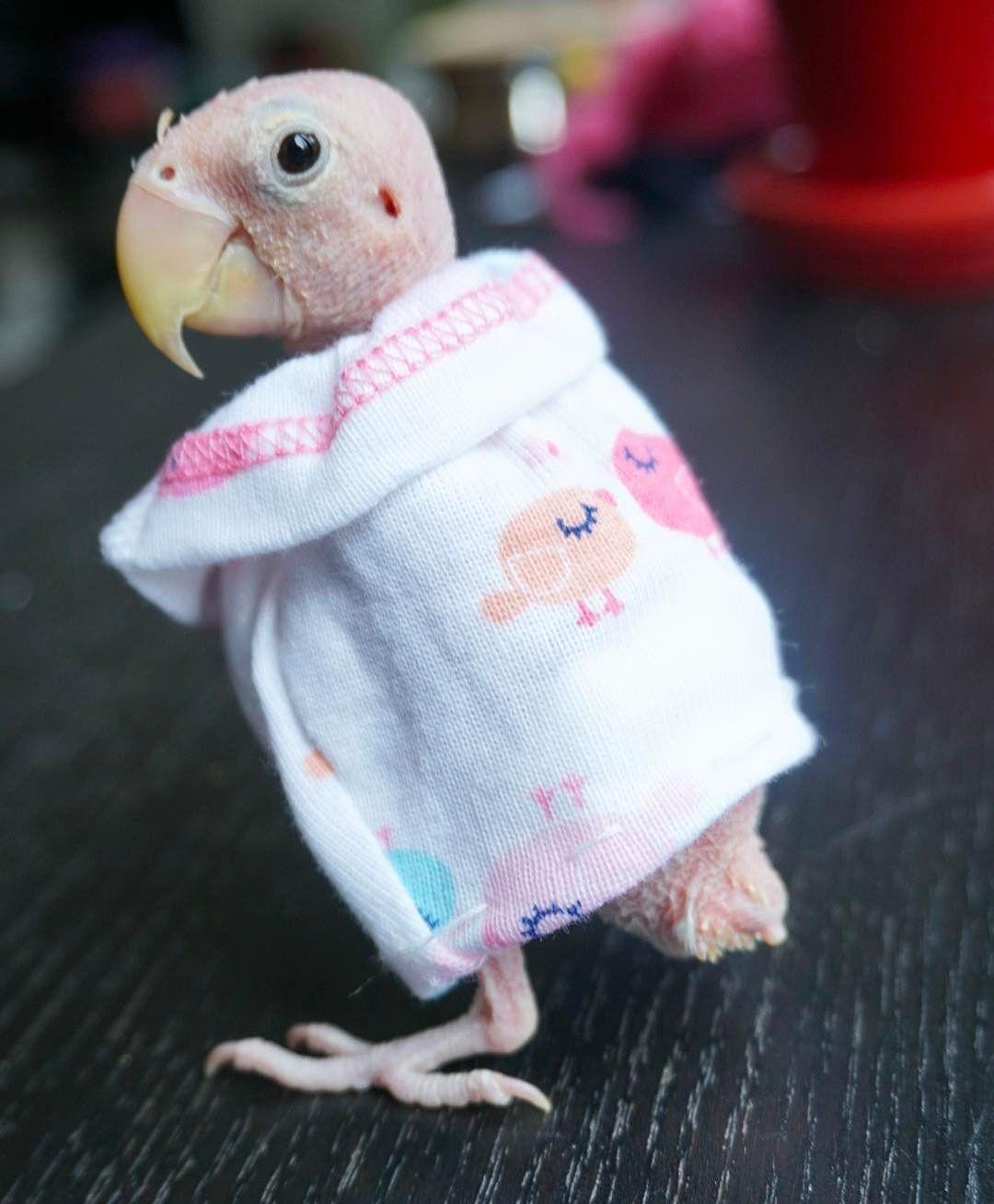 Pin By Jilene Allen On Beautiful Birds-5678