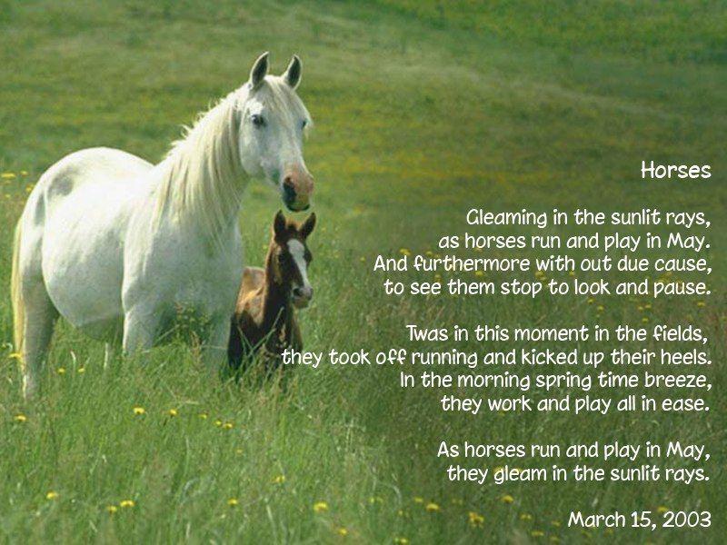 Beautiful Horses Poems Pinterest Horse
