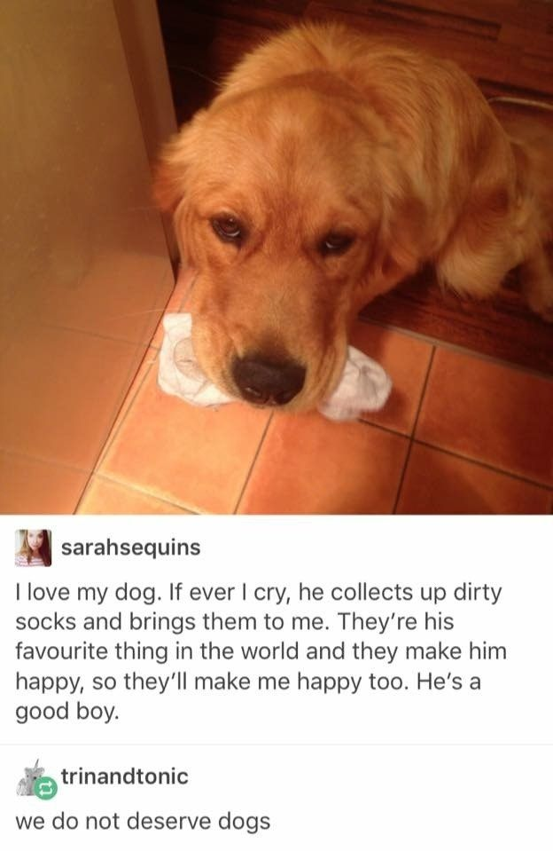 Photos That Prove Dogs Cant Possibly Be Real Dog Animal And - The 18 saddest photos on the internet