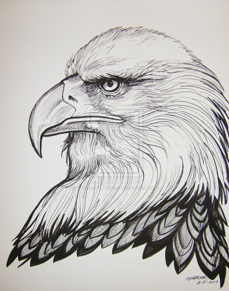 Drawings Ink Eagles Pen And
