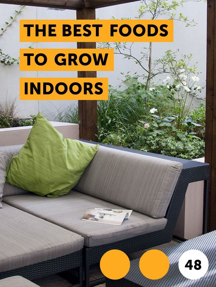 The Best Foods To Grow Indoors Bamboo Plants Plants 400 x 300