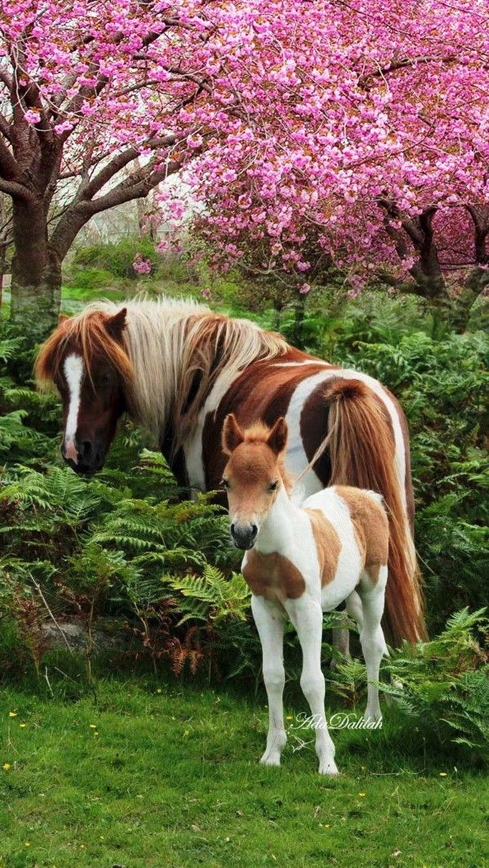 Süße tiere, Pferde, Tiere