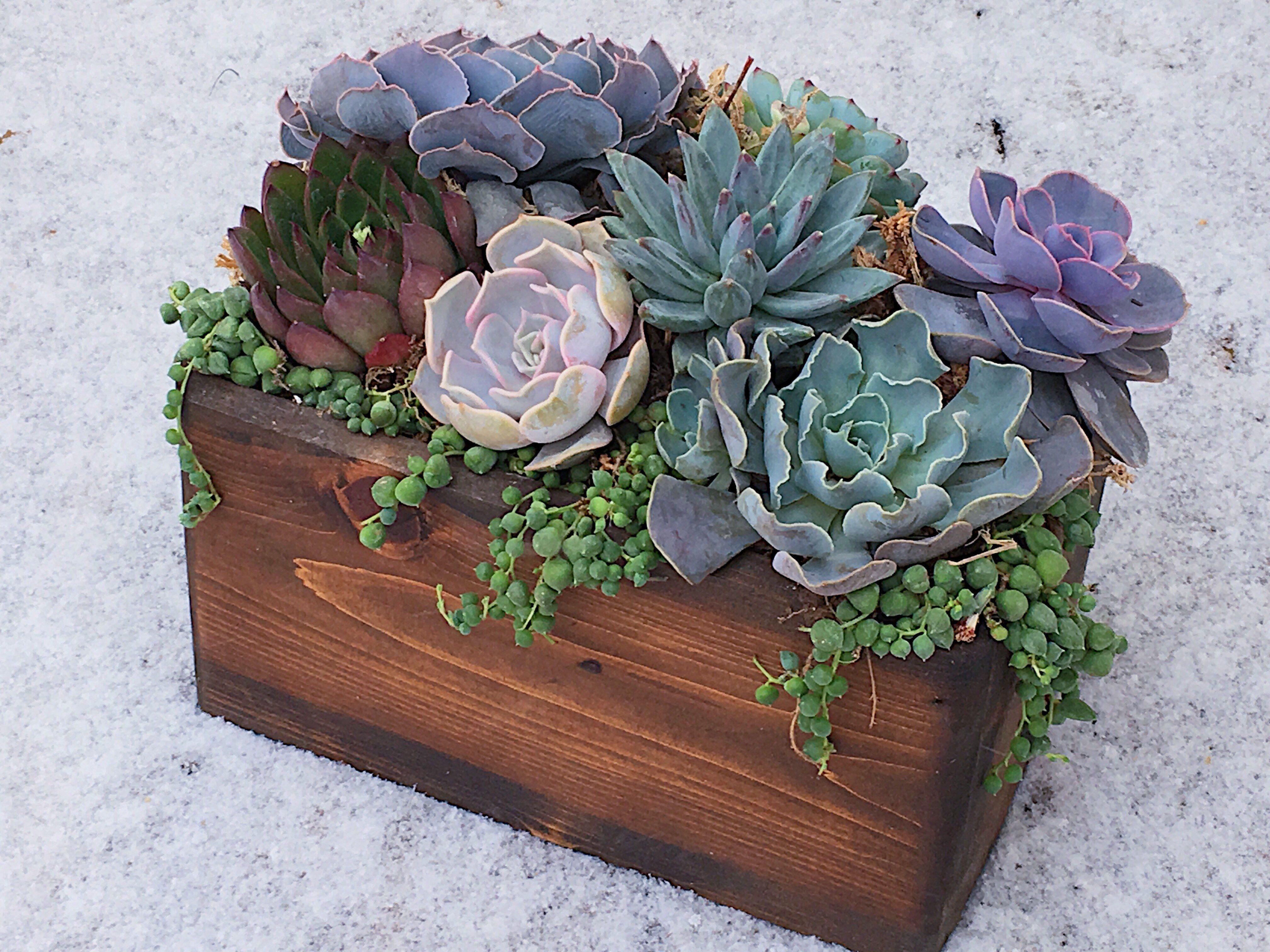 Diy succulent planter box arrangement kit succulent