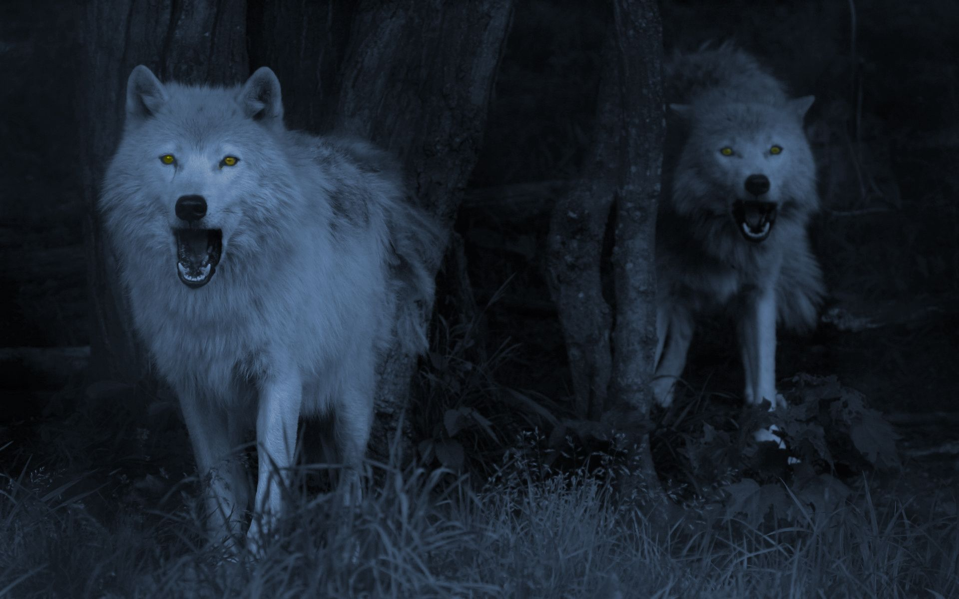 Wolves Wallpaper Wolf Wallpaper Wolf Pictures Animals