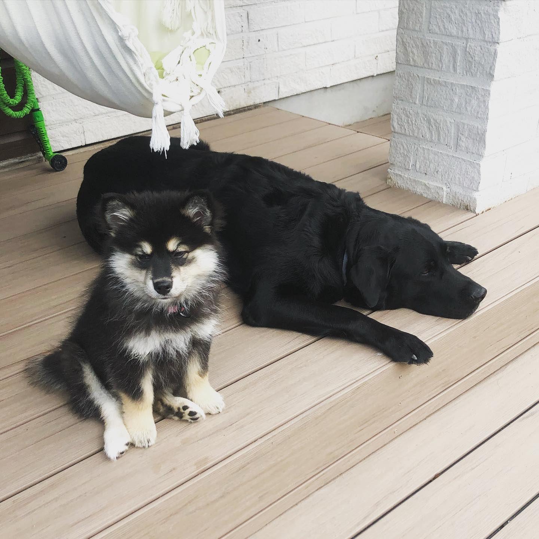 Guard #dogs #dogsofinstagram #stella #blackdog