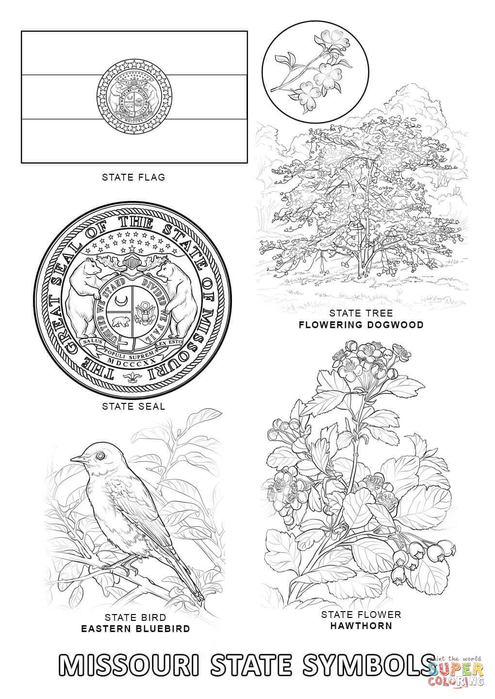 Missouri State Symbols Coloring Page Free Printable Coloring