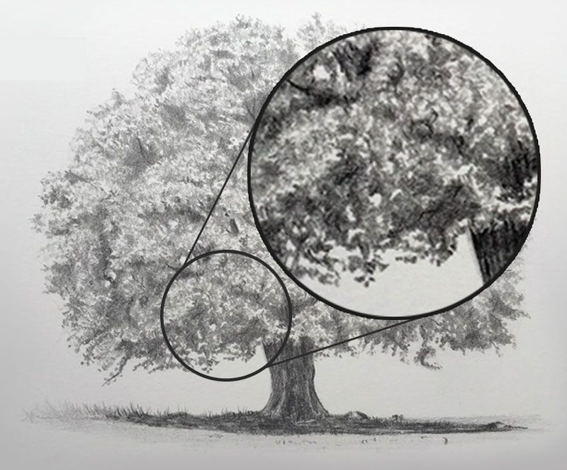 How To Draw Realistic Trees