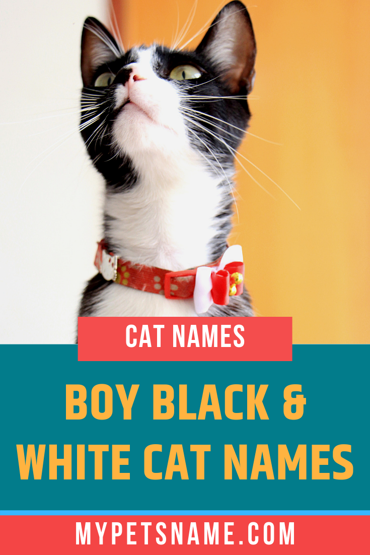 Just Like When Picking Names For A Female Cat It Can Be Helpful To Look At Popular Human Male Names When Looking At N Cat Names Boy Cat Names Kitten Names