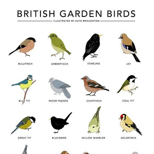 images about Birds of Great Britain on Pinterest Garden