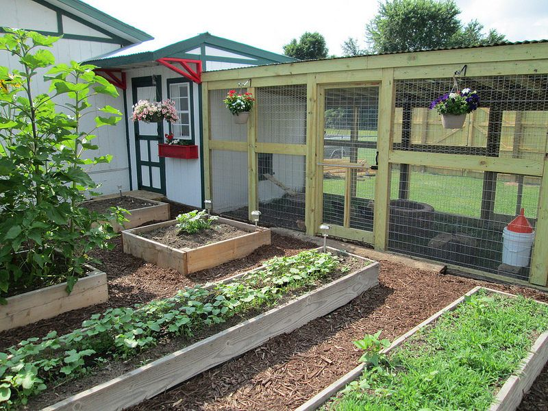Cheryl S Hen House Backyard Farming Chicken Coop Garden Backyard