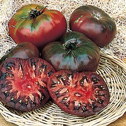 purchased a cherokee purple tomato plant at mazzone hardware this morning. yum.
