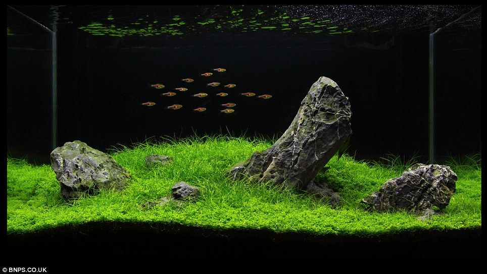 Zen and the art of fish tank maintenance: \'Aquascapers\' herald the ...
