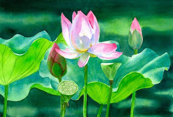 Rose Fleur De Lotus Aquarelle Aquarelle Originale Nenuphar Art