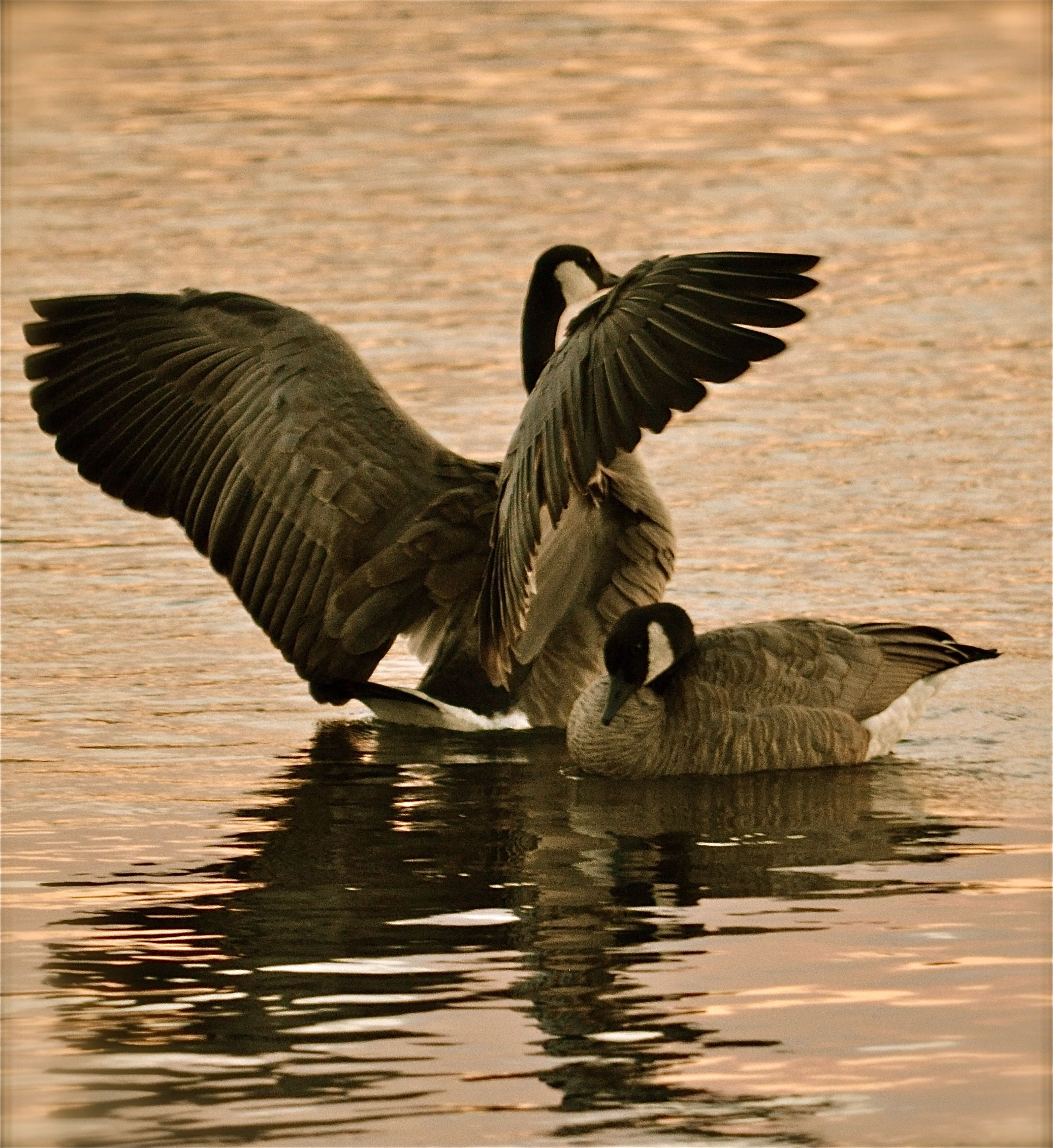 """Please know that your addiction or that of a loved one does """"not"""" define who you/they are...Spread your wings and find that person who has been just an arms length away long enough to forget """"what's right with you"""""""