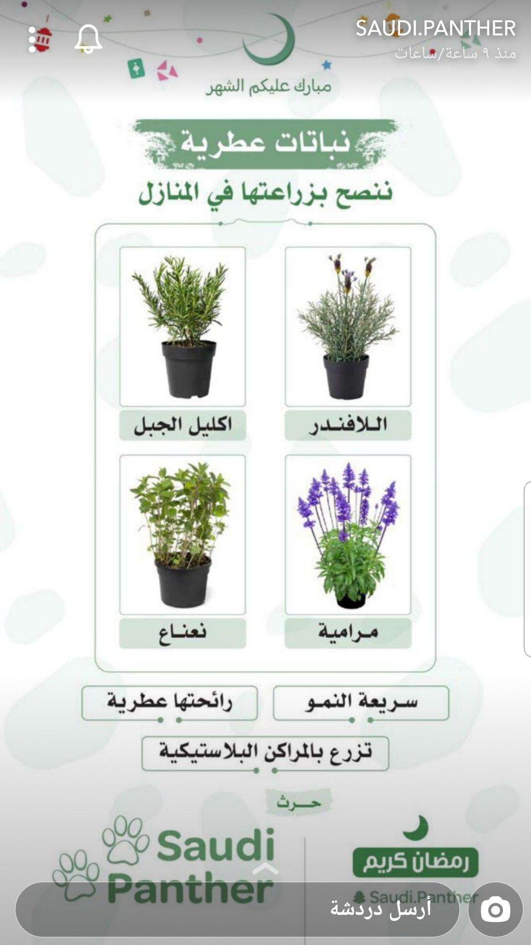 Pin By Ghadur Noor On House Plants Garden Companion Planting Plant Decor Indoor House Plants Decor
