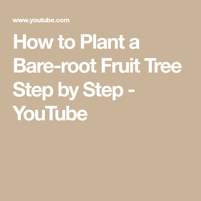 How To Plant A Bare Root Fruit Tree Step By Step Youtube Fruit Trees Grow Your Own Food Trees To Plant