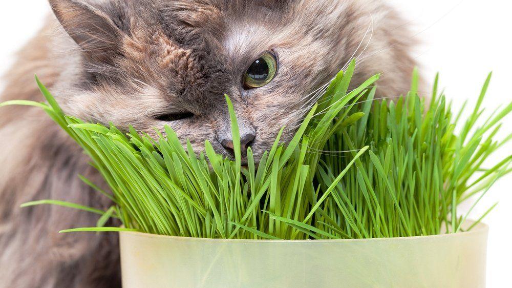 plante interieur pour chat