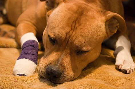 5 Natural & Safe Home Remedies for Blood in Dog Stool
