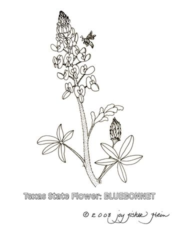 Bluebonnet 450 Jpg 350 450 Pixels With Images Black And White